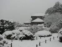 hyakusai_1_snow_brewery.jpg