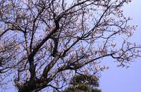 meikyo_6_flower.jpg